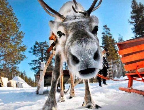 А вы уже выбрали куда поехать на Новогодние каникулы?